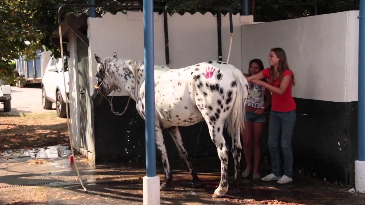 Salon du cheval 1 re dition 2013 toulouse - Salon cheval toulouse ...